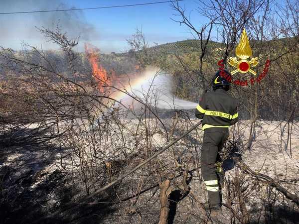 Incendio in un oliveto: danni alla linea telefonica, Vigili del Fuoco e volontari sul posto