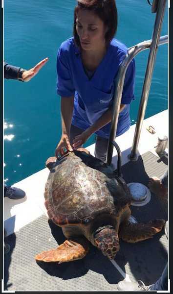 La tartaruga T. Roverella torna a solcare il mare: liberata a largo di Talamone