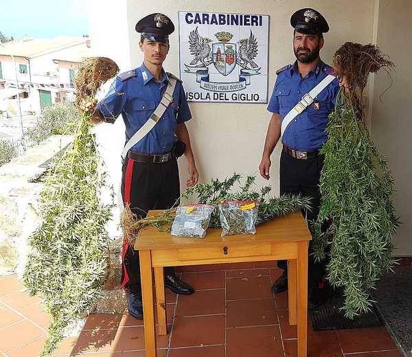 Coltiva piante di marijuana in un campo vicino al cimitero: giovane denunciato