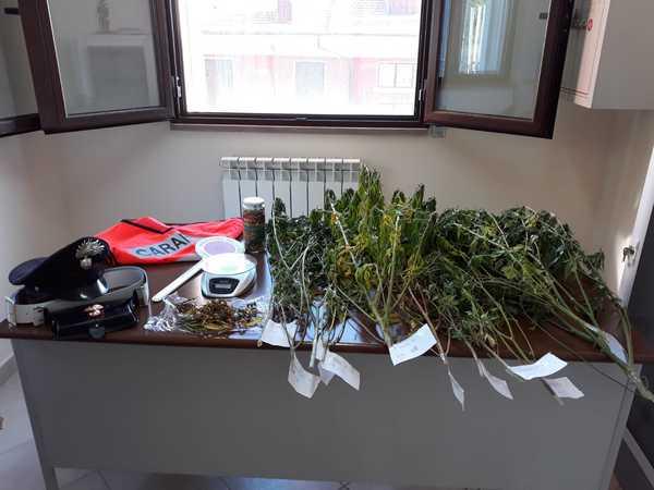 Coltiva 11 piante di marijuana in casa: denunciata pensionata