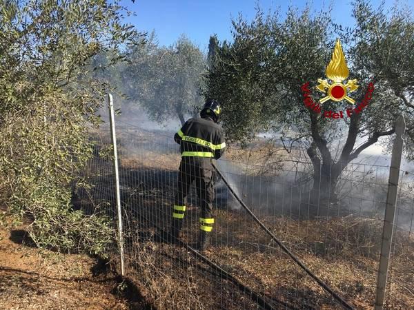 Incendio a Gavorrano: in fiamme tre ettari di oliveto