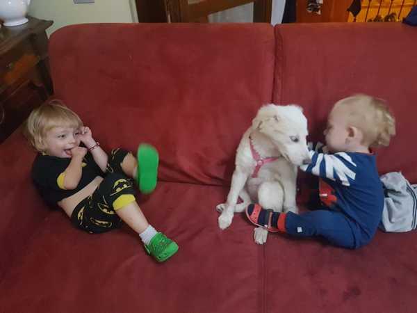 """Photo of Laska e Bella hanno trovato una famiglia: successo dell'iniziativa """"Fatti del bene, adotta un cane del canile"""""""