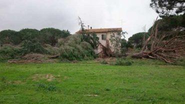 Allerta meteo per vento: scuole chiuse anche a Follonica
