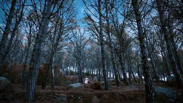 """""""Naturale"""", ecco il videoclip dei Secondamarea: è stato girato all'Isola del Giglio"""