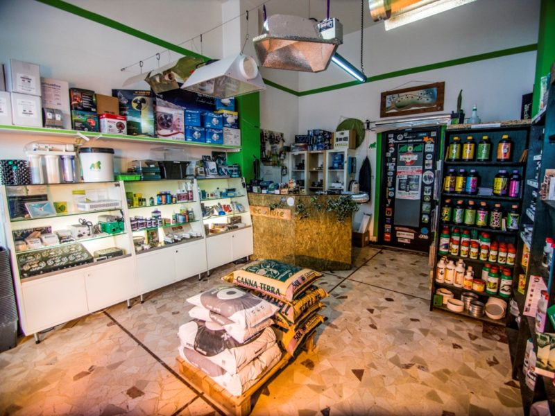 """Tre nuovi growshop nell'ultimo anno a Grosseto: """"cannabis light"""" traina il boom"""