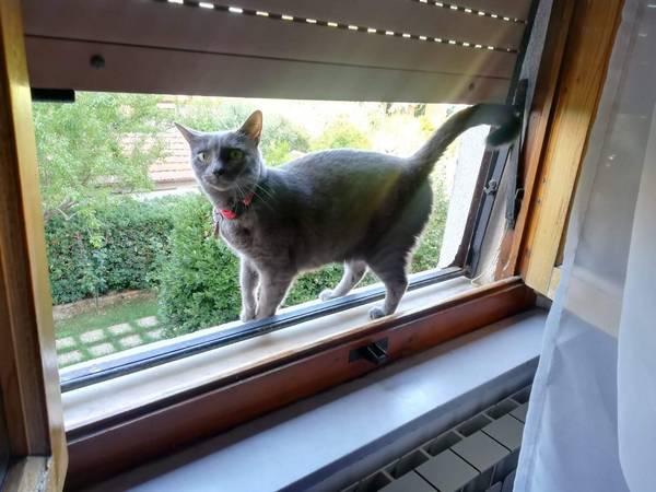 """Photo of Gatto scomparso in città, l'appello dei proprietari: """"Una ricompensa per chi lo trova"""""""