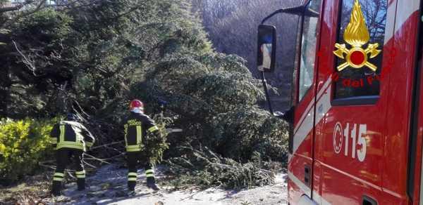 Alberi pericolanti, un camino caduto a terra: Vigili del Fuoco al lavoro per il forte vento