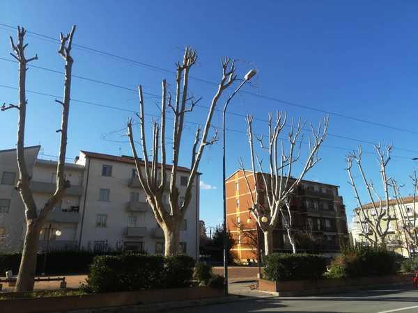 """Verde pubblico, Grosseto al Centro: """"Perchè il Comune non rispetta il regolamento?"""""""