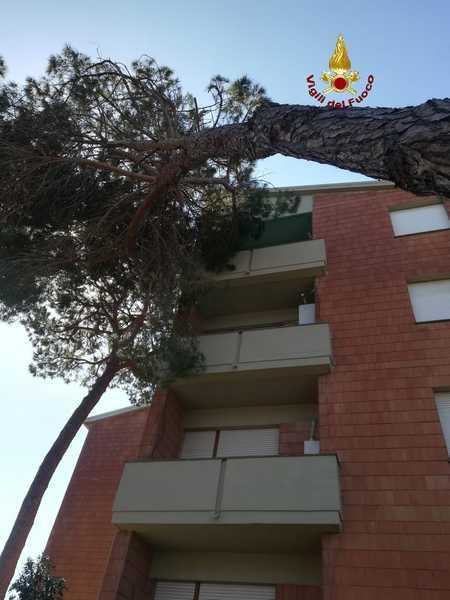Forte vento in Maremma: un pino si appoggia ad una terrazza di una casa