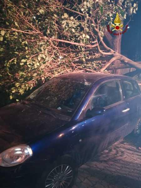 Rami pericolanti, piante e tegole sulle auto parcheggiate: numerosi interventi dei Vigili del Fuoco per il forte vento