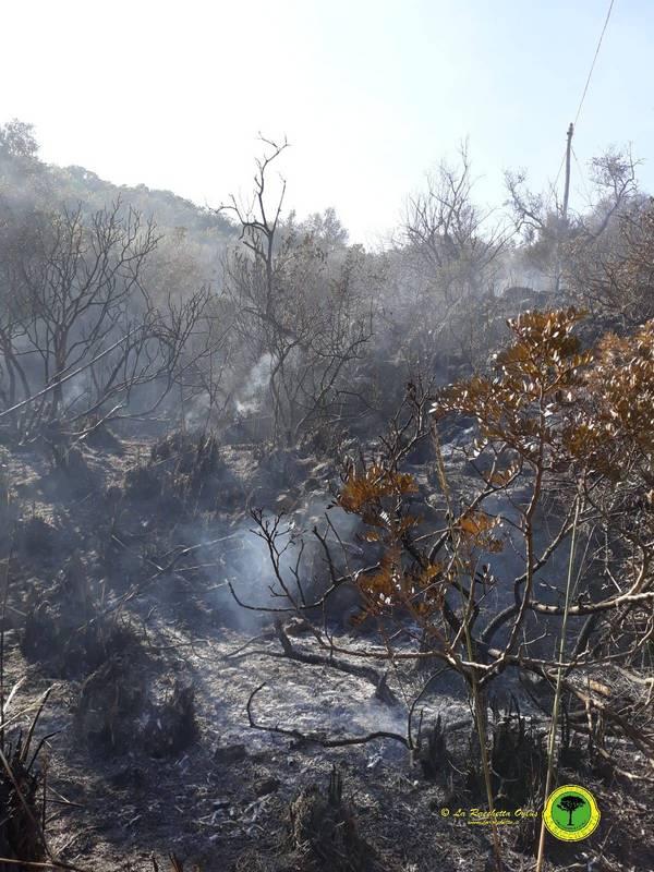 Incendio all'Argentario: in fumo la macchia a Santa Liberata