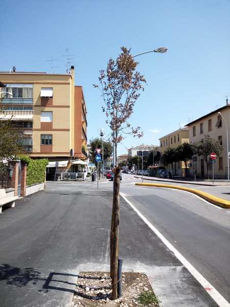 """Taglio degli alberi, il comitato: """"Stop a spreco di soldi pubblici, serve Piano del verde"""""""