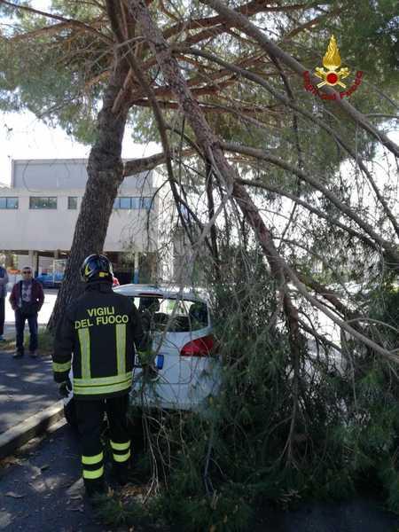 Ramo pericolante cade su auto parcheggiata: Vigili del Fuoco sul posto, strada chiusa