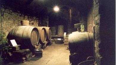 Photo of Nuove idee e servizi: riapre il Museo della vite e del vino. Ecco gli orari