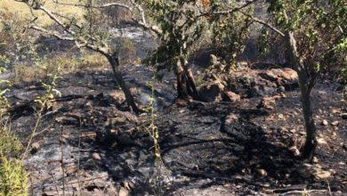 Photo of Incendio in un bosco: in fiamme 4000 metri di sterpaglie, Vigili ed Aib in azione