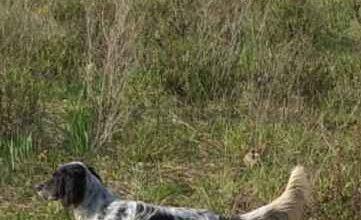 Photo of Cane cade in un pozzo pieno d'acqua: soccorso e salvato dai Vigili del Fuoco