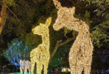 "Photo of ""Incantolandia"": sbarca in Maremma il primo parco di luminarie in Europa"