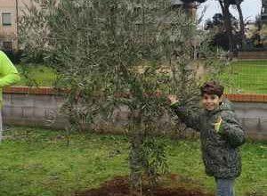 """Photo of """"SeminiAmo la legalità"""": gli studenti piantano un ulivo in memoria di Paolo Borsellino"""