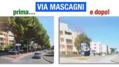 """Photo of Viale Mascagni, Grosseto al Centro: """"Ordinanza del taglio dei pini ha violato la legge"""""""