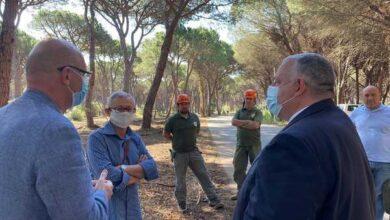 Photo of Prevenzione incendi, a Principina a Mare arrivano le fasce parafuoco
