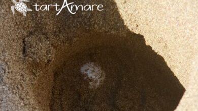 Photo of Ambiente marino: laboratori per bambini e gazebo informativo di TartAmare alla Green Beach
