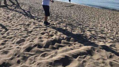 Photo of Tartaruga marina depone le uova sulla spiaggia di Macchiatonda: il nido messo in sicurezza
