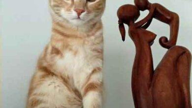 """Photo of Paul si è perso, l'appello dei proprietari: """"Aiutateci a ritrovare il nostro gattino"""""""