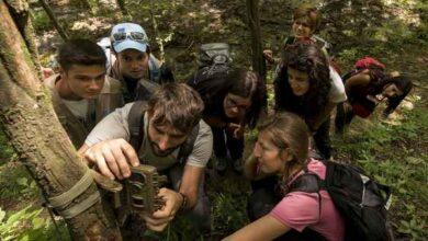 Photo of I Carabinieri Biodiversità cercano 360 volontari per il monitoraggio delle riserve naturali: ecco come partecipare