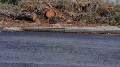"""Photo of Scansano, la segnalazione: """"Nella via principale regna il degrado, il Comune non interviene"""""""