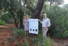 Photo of Il Comune dichiara guerra al parassita che uccide gli alberi: al via i lavori nelle pinete