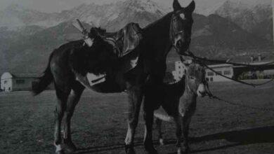 """Photo of 60 anni fa moriva Albino, il """"cavallo d'Italia"""": il Savoia ricorda uno dei suoi eroi"""